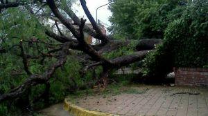 tormenta-arbol-caido