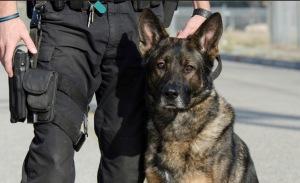 Perro policia 2