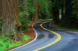 ruta-bosque