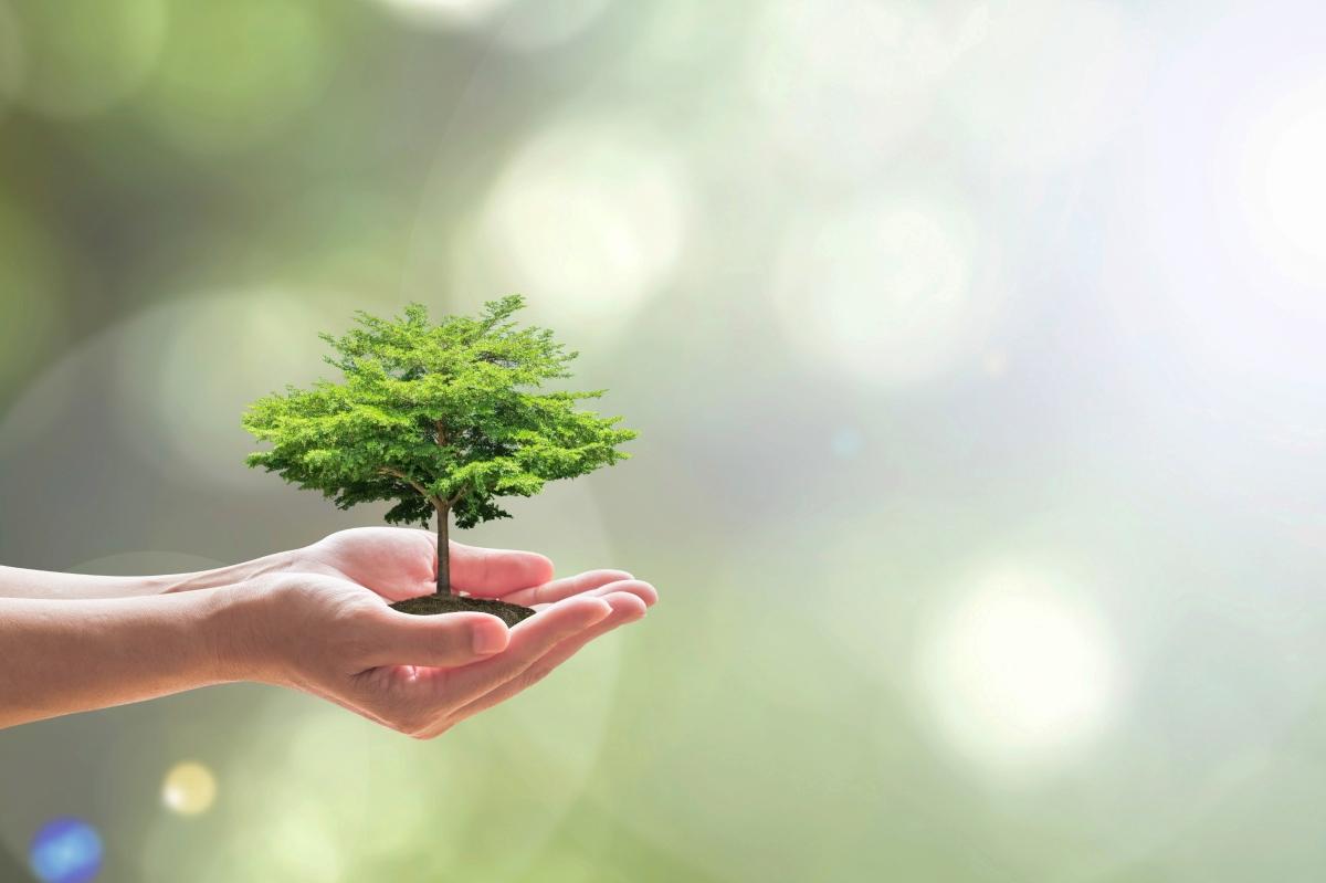 Defensa del ambiente. Defensa de los vulnerables – AL DÍA